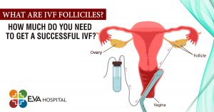 What are IVF Folliciles How much do you need to get a Successful IVF